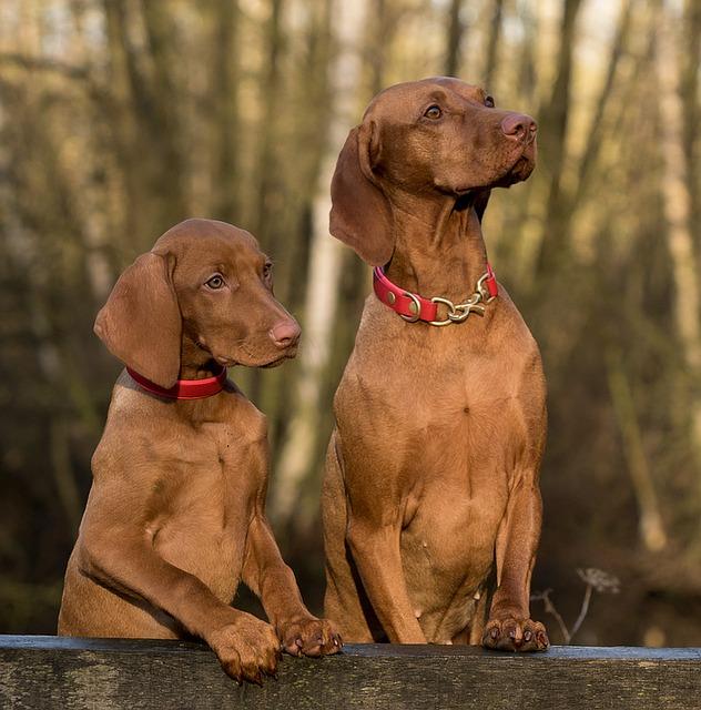 חיסון משושה לכלב - מה תופעות הלוואי שאתם צריכים לצפות להם?