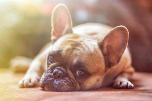 איך מתמודדים עם אובדן של בעל חיים