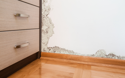 טעויות נפוצות שבני הבית עושים כאשר יש עובש בקירות